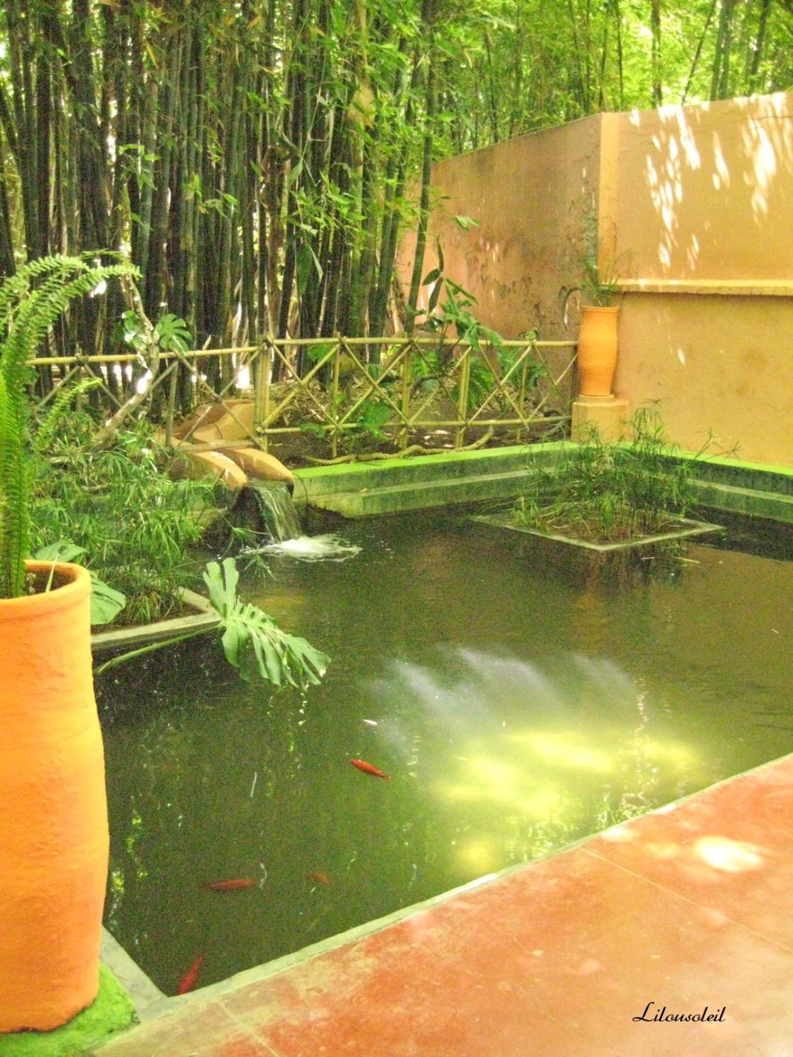 semaine 4 parc Majorelle Maroc.jpg