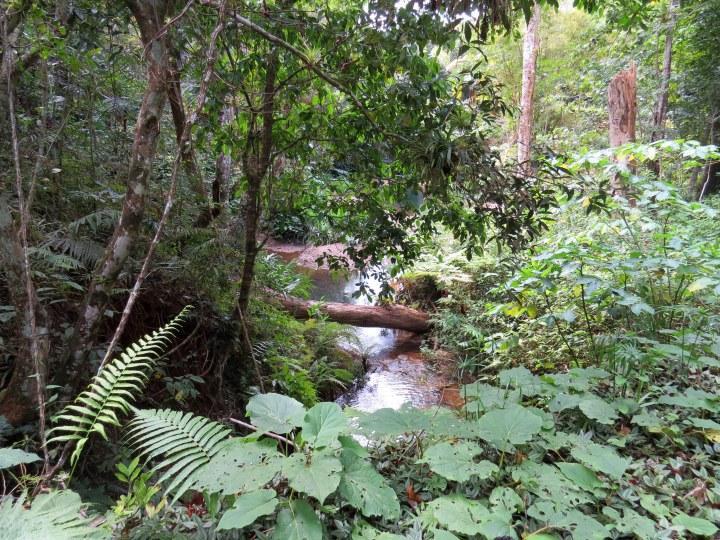 dans-la-foret-tropicale-humide-1