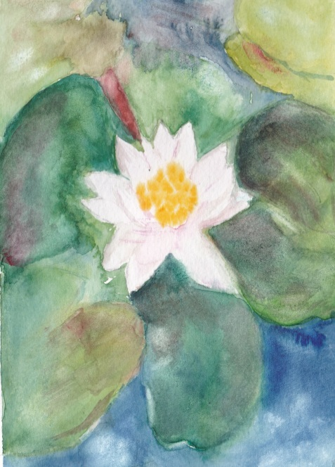 nenuphar-blanc-de-francois