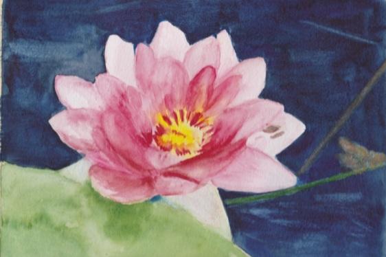 nenuphar-rose-de-francois