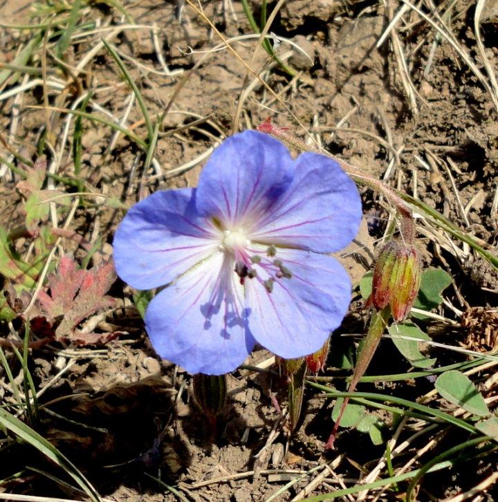 semaine-6-kirghizistan-petite-fleur