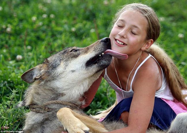 10 - Photo du dimanche loup det petite fille