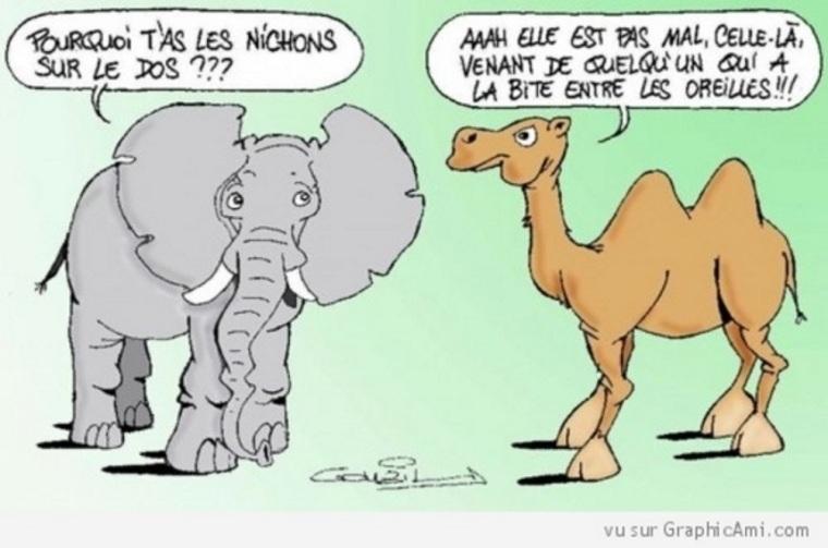 chameau et éléphant