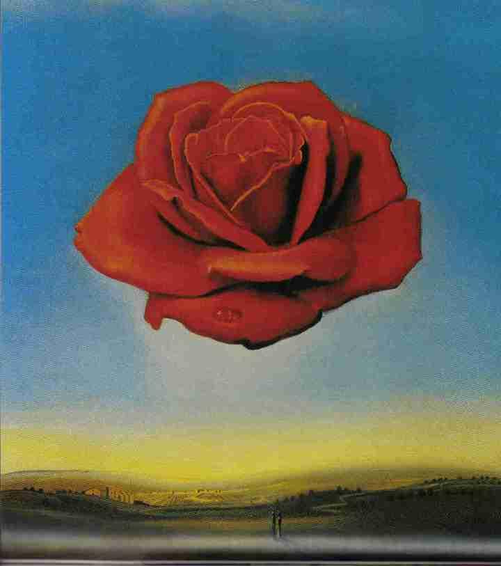 dali2 la rose
