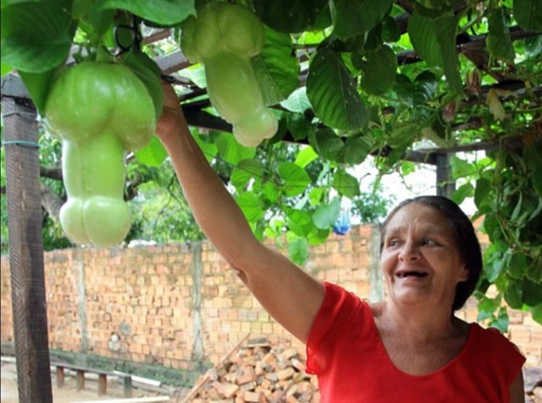 les tomates en forme