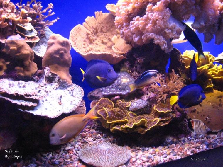 Photo 095 prise ne Isarël un aquarium