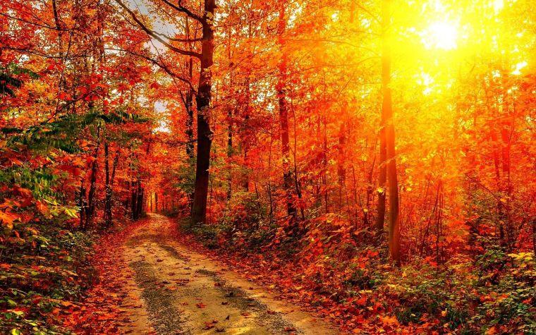 810-automne-dans-le-fond-decran-de-la-foret