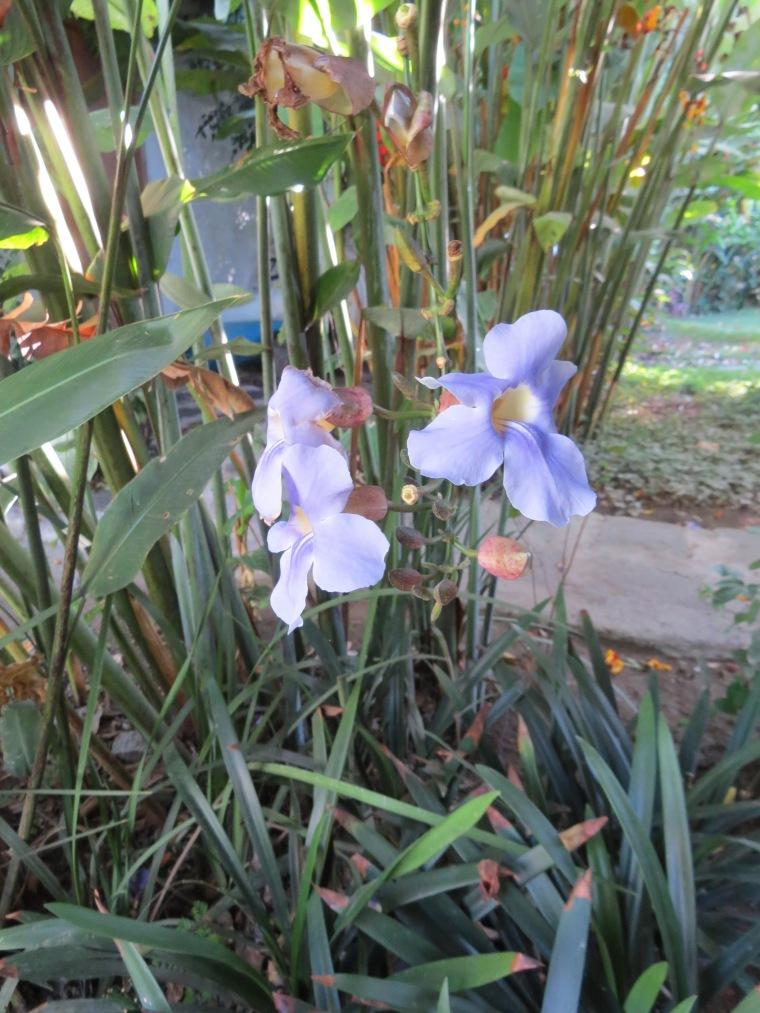 semaine 18 19 clic clac orchidée au Guatemala