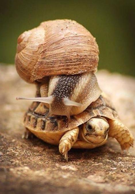 escargot et tortue